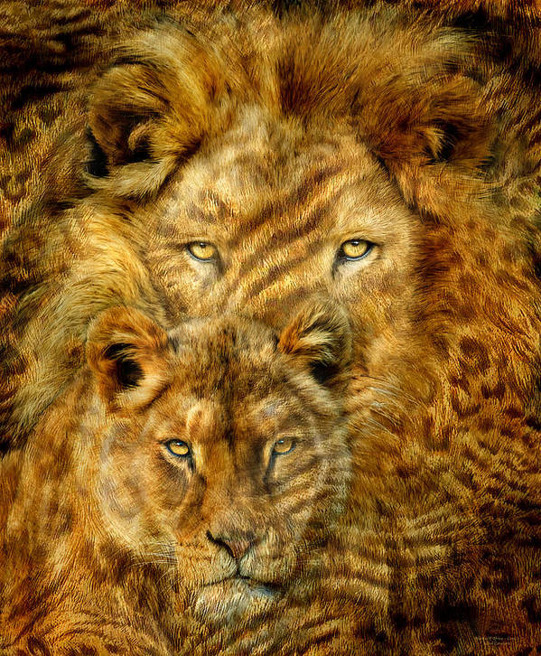 Lion Art Print featuring the mixed media Moods Of Africa - Lions 2 by Carol Cavalaris
