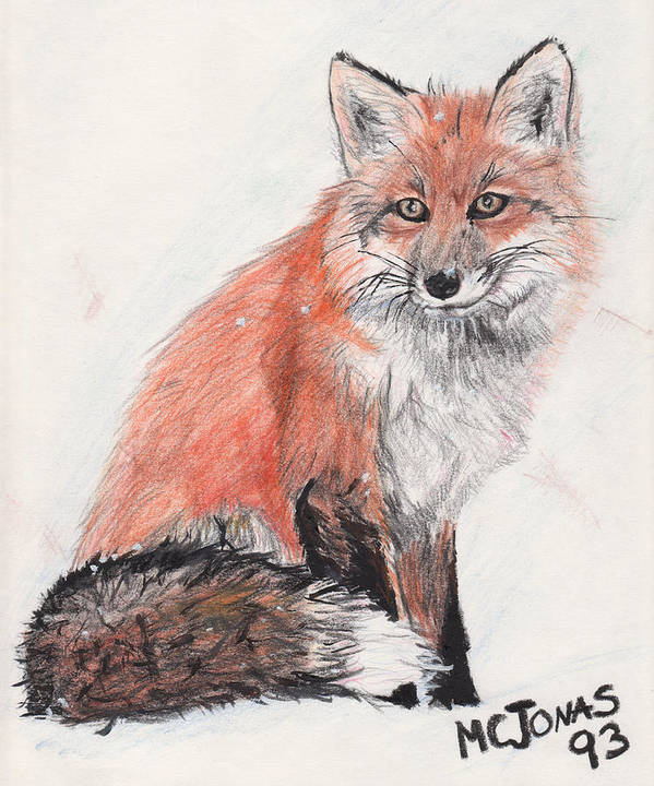Red Fox Art Print featuring the drawing Red Fox In Snow by Marqueta Graham