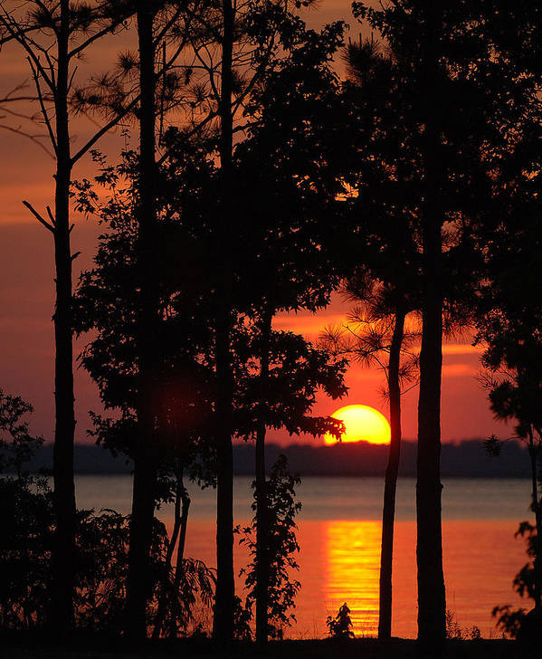 Sunset. Trees Art Print featuring the photograph Summer Sunset by Travis Aston