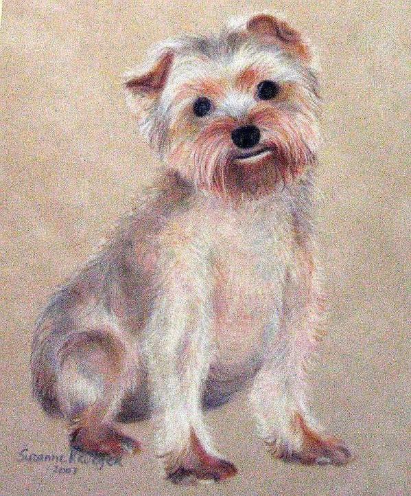 Yorkie Art Print featuring the pastel Tootsie by Suzanne Krueger