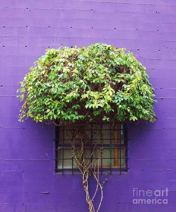 Plant Art Print featuring the photograph Window Treatment by Rochelle Evonne Pigman