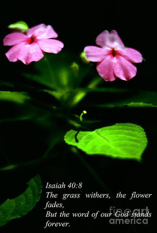 Scripture Art Print featuring the photograph Grass Withers Flowers Fade by Thomas R Fletcher