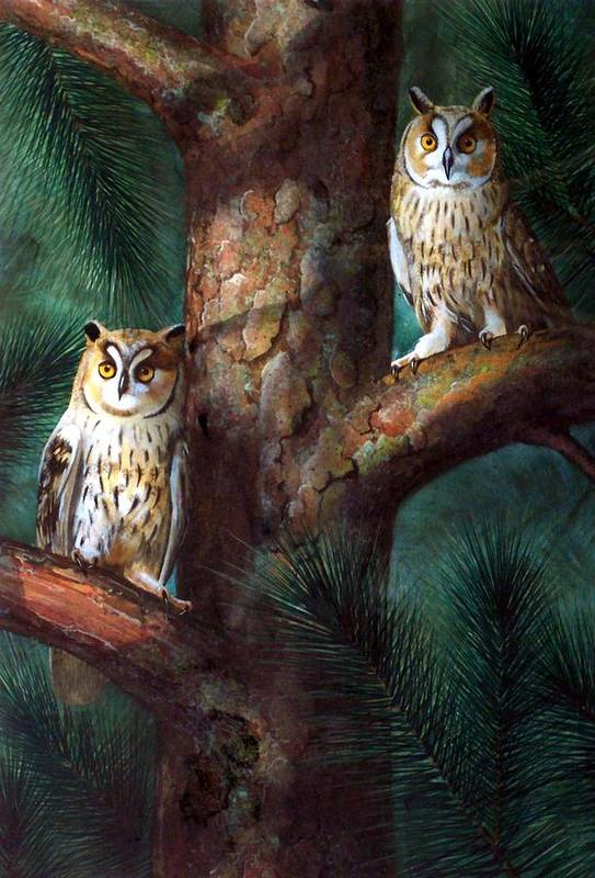 Wildlife Art Print featuring the painting Owls In Moonlight by Frank Wilson