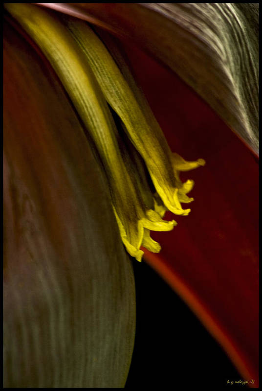 Flora Art Print featuring the photograph Banana Blossom by Daniel G Walczyk