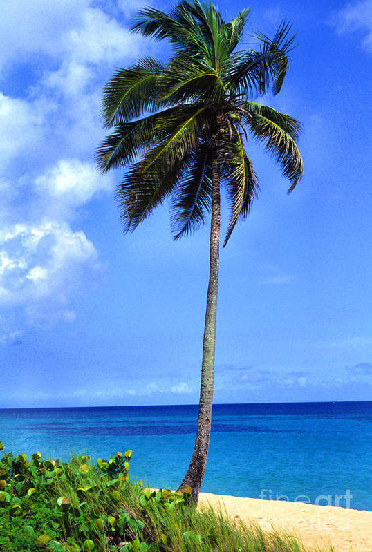 Puerto Rico Art Print featuring the photograph Lonely Palm Tree Los Tubos Beach by Thomas R Fletcher