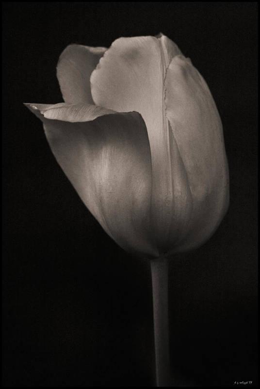 Flora Art Print featuring the photograph Quiet Beauty by Daniel G Walczyk
