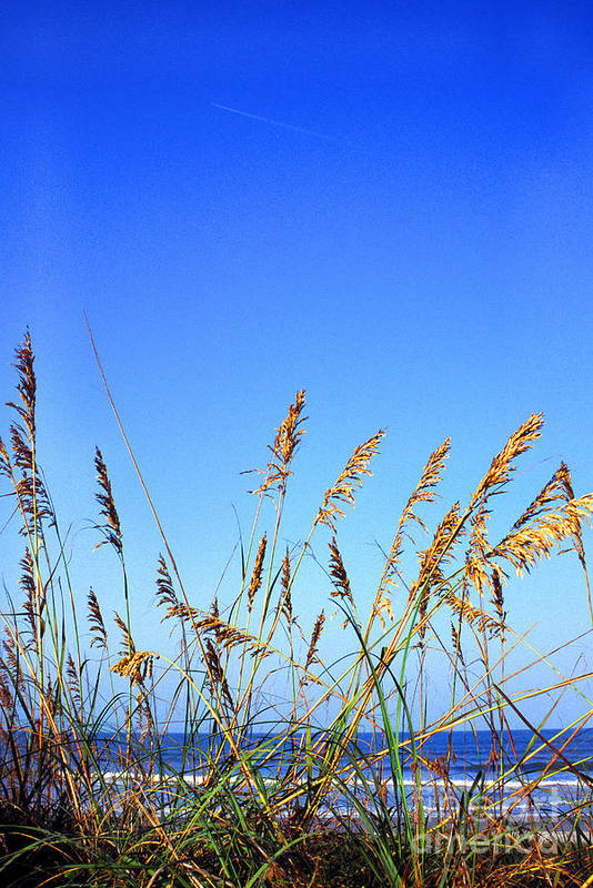 Sea Art Print featuring the photograph Sea Oats Atlantic Ocean by Thomas R Fletcher