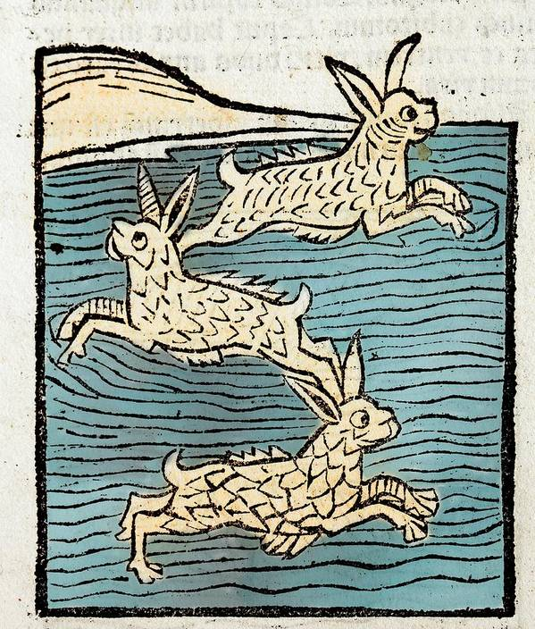 15th Century Art Print featuring the photograph 1491 Sea Hares From Hortus Sanitatis by Paul D Stewart