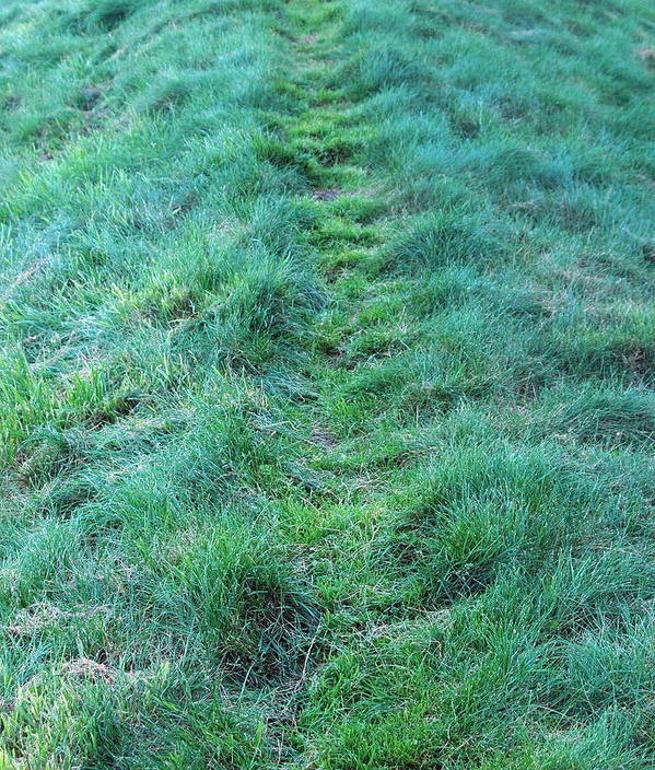 Green Art Print featuring the photograph Green Grass Pathway. by Oscar Williams
