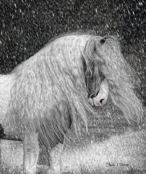 Gypsy Horses Art Print featuring the digital art Nor Easter by Fran J Scott