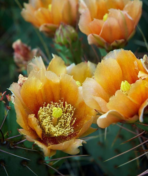 Prickly Pear Cactus by Mary Lee Dereske