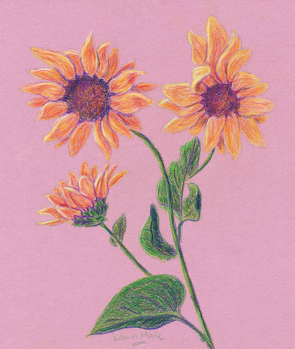 Flowers Art Print featuring the drawing Sun Flowers by Dawn Marie Black