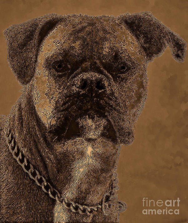 Dog Art Print featuring the photograph The Modern Boxer Bulldog by Lesa Fine