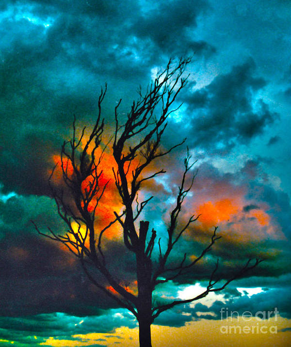 Tree Photograph Art Print featuring the photograph Blackened by Joanne Kocwin