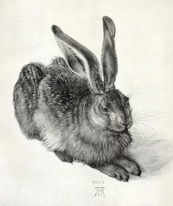 Durer Art Print featuring the photograph Young Hare, By Durer by Sheila Terry