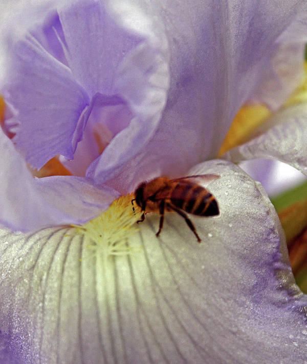 Bee Picture Art Print featuring the photograph Bee U T Ful by Kami McKeon