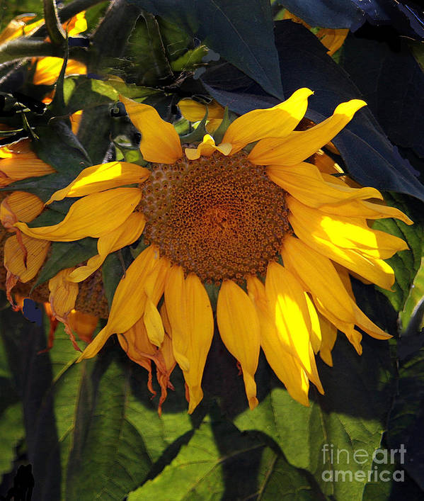 Flowers Art Print featuring the photograph f31 by Tom Griffithe