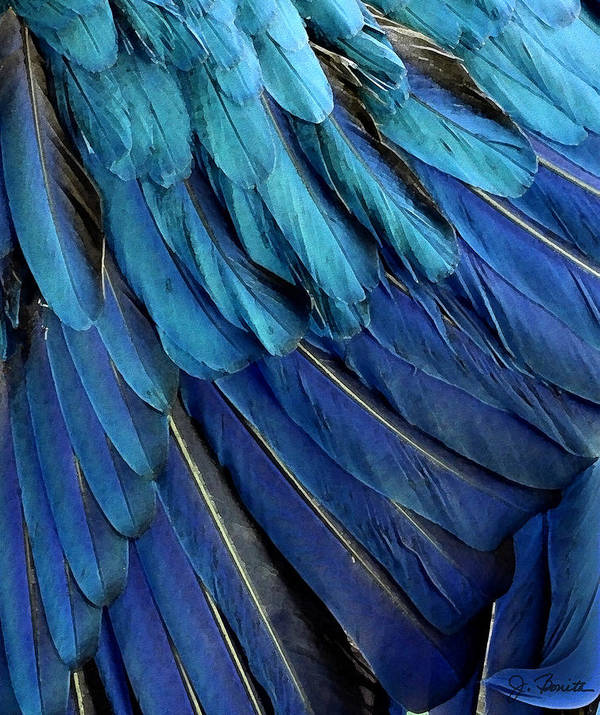 Feather Art Print featuring the photograph Feathered by Joe Bonita