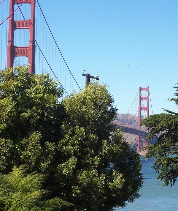 Golden Gate Bridge Art Print featuring the photograph Golden Gate by Elizabeth Klecker