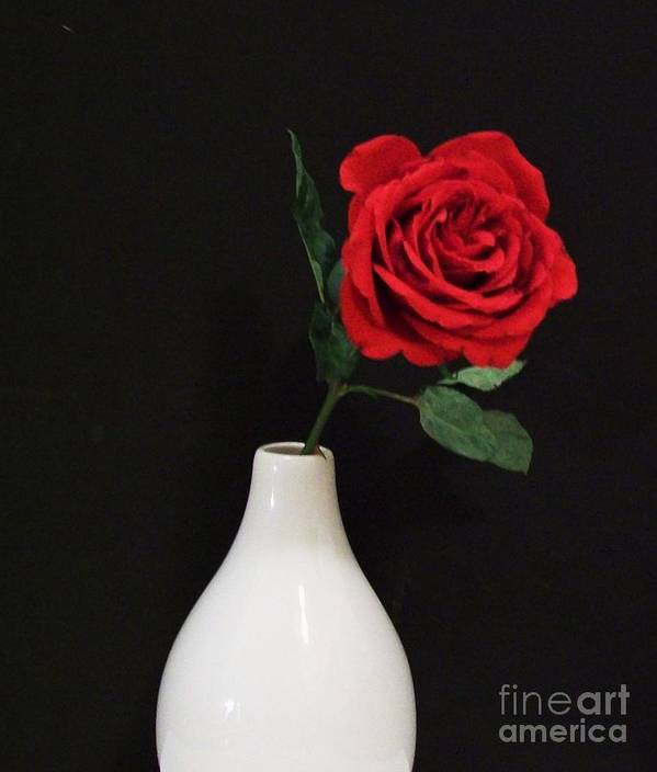 Red Rose On Black Art Print featuring the photograph The Lonely Red Rose by Marsha Heiken