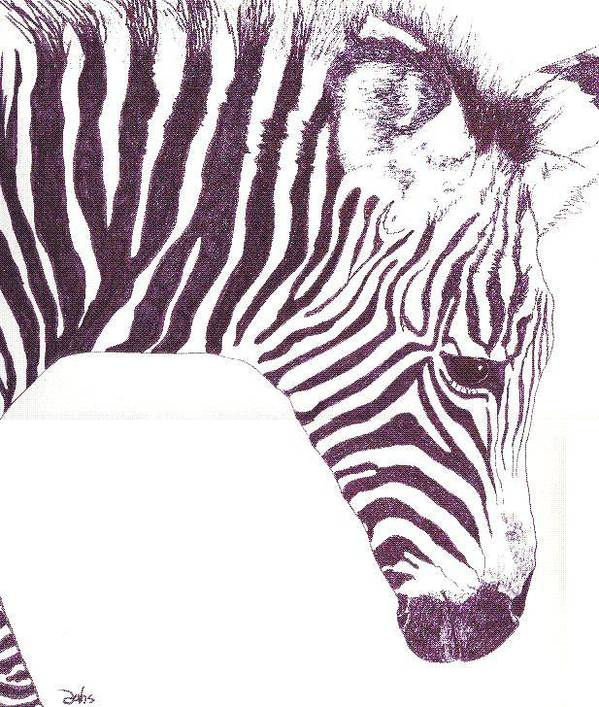 Zebra Art Print featuring the painting Zebra Colt by Debra Sandstrom