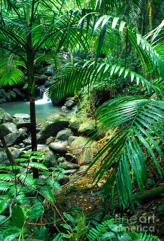Puerto Rico Art Print featuring the photograph El Yunque Palm Trees And Waterfall by Thomas R Fletcher