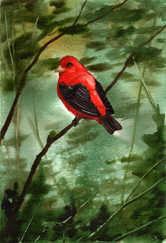 Birds Art Print featuring the painting Scarlet Tanager by Sean Seal