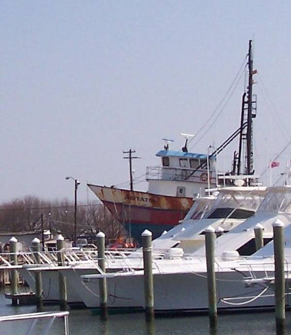 Boat Art Print featuring the photograph Boats Docked by Pharris Art