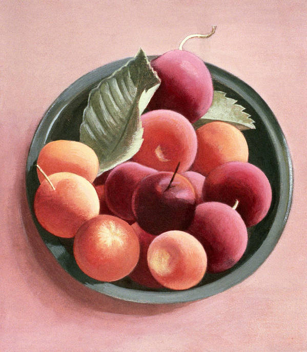 Plum Print featuring the painting Bowl Of Fruit by Tomar Levine