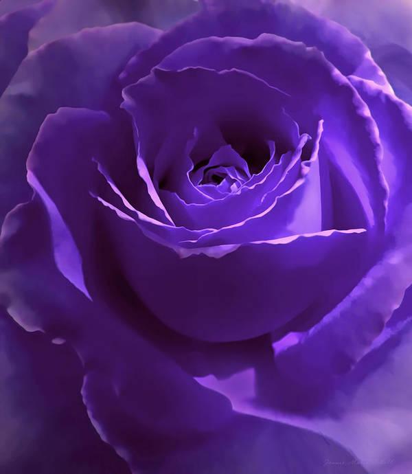 Rose Print featuring the photograph Dark Secrets Purple Rose by Jennie Marie Schell
