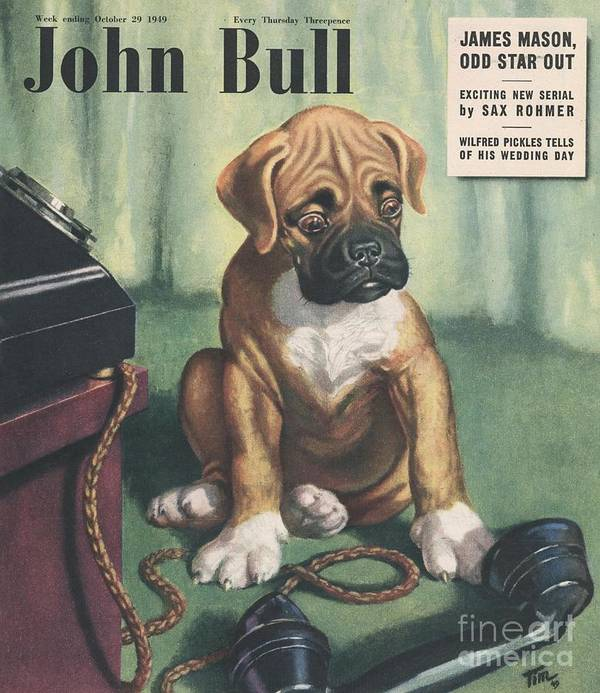 1940�s Art Print featuring the drawing John Bull 1949 1940s Uk Dogs Magazines by The Advertising Archives