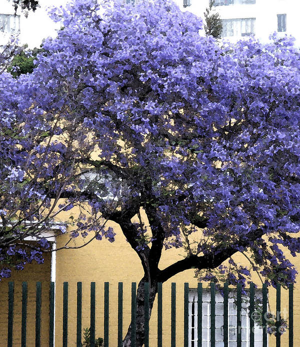 Lavender Art Print featuring the photograph Lavender Tree by Patricia Januszkiewicz
