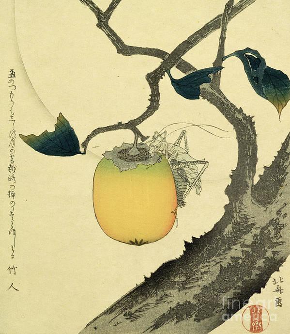 Japanese Art Print featuring the drawing Moon Persimmon And Grasshopper by Katsushika Hokusai