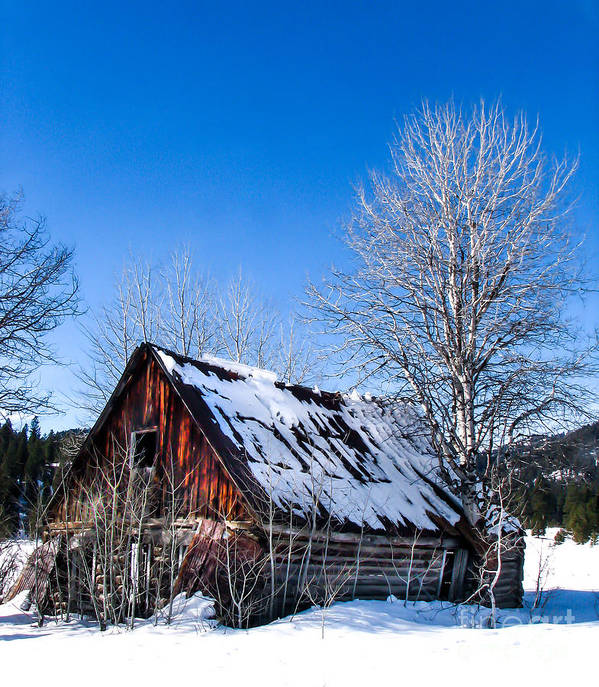 Cabin Art Print featuring the photograph Snowy Cabin by Robert Bales