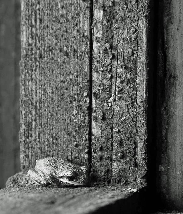 Frog Art Print featuring the photograph Taking Refuge by Angie Vogel