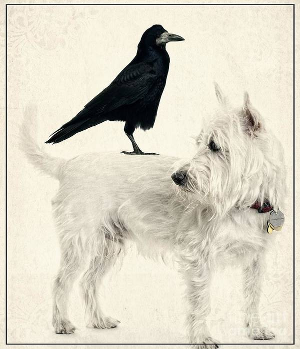 Crow Art Print featuring the photograph The Hitchhiker by Edward Fielding