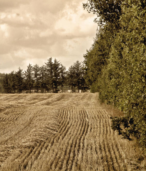 Harvest Art Print featuring the photograph Same As It Always Was by Odd Jeppesen
