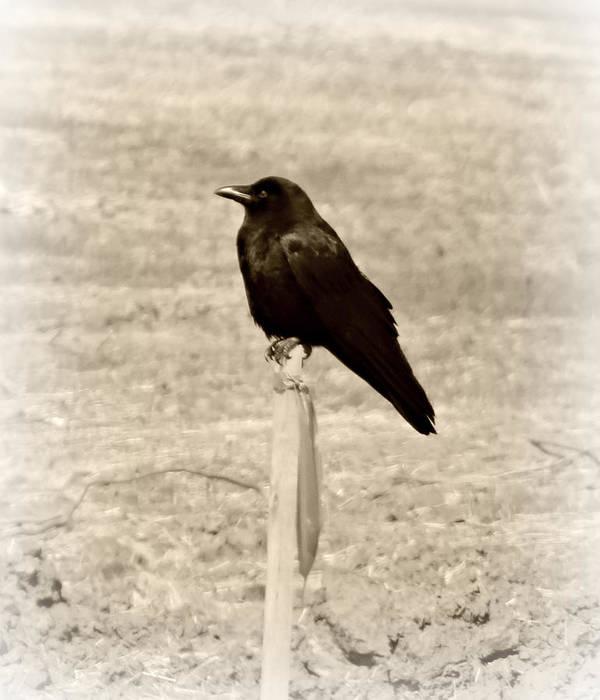 Bird Art Print featuring the photograph Sitting Pretty by Brenda Conrad