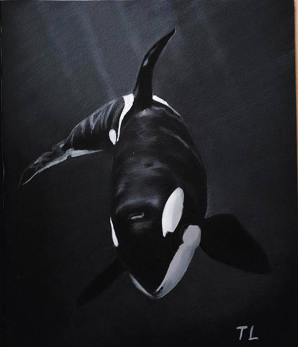Orca Art Print Featuring The Drawing Blackfish By Tania Larionova