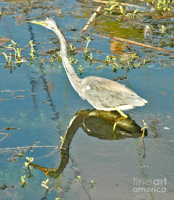 Blue Heron Art Print featuring the photograph Blue Heron Walking by Allan Einhorn