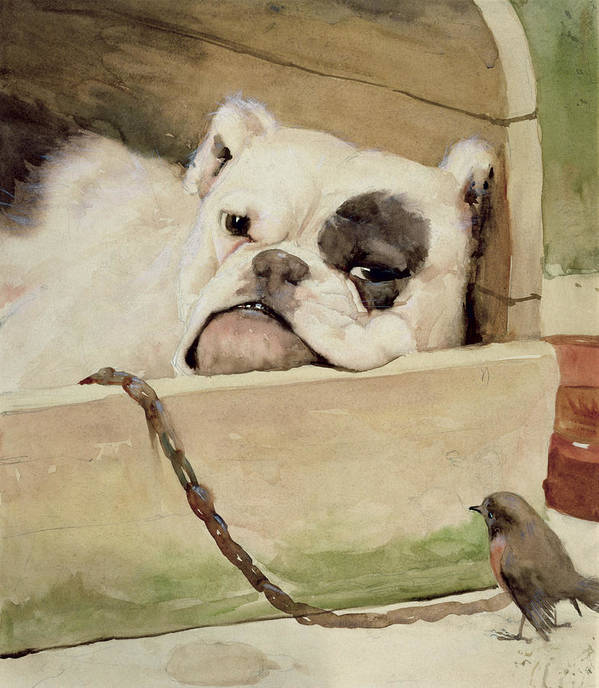 Bull Dog; Robin; Bird; Kennel; Pet Art Print featuring the painting Bulldog by Cecil Charles Windsor Aldin