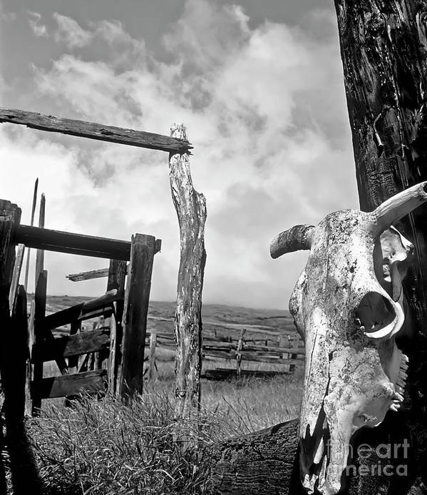 Black And White Art Print featuring the photograph Guardian Spirit by Jim Cazel