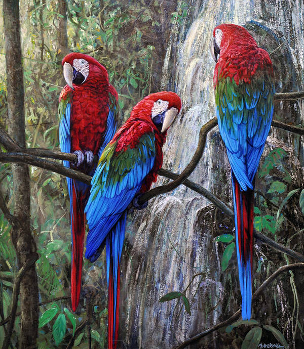 Macaws Art Print featuring the painting In Front Of The Cascade by Gabriel Hermida