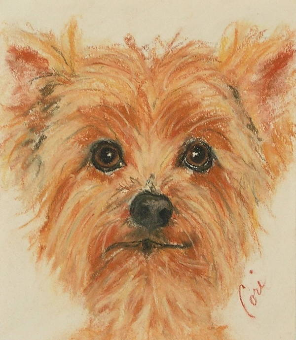 Pastel Art Print featuring the drawing Lil Rascal by Cori Solomon