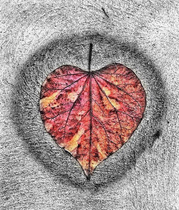 Digital Art Art Print featuring the digital art Natural Heart by Justin Boysko
