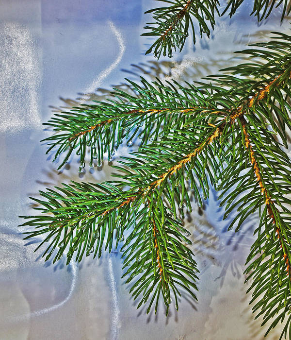 Pine Art Print featuring the photograph Pine Needles In The Rain by Richard Risely