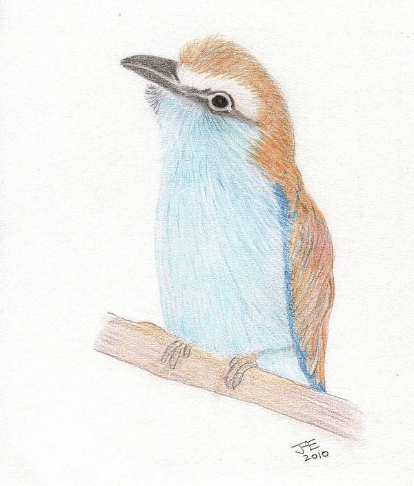 Racquet-tailed Roller Art Print featuring the drawing Racquet-tailed Roller by Jacqueline Essex