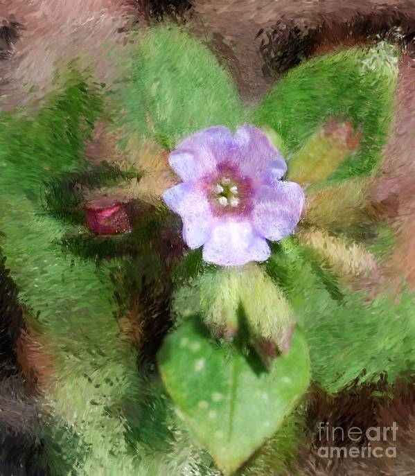Digital Photo Art Print featuring the photograph Untitled Floral -1 by David Lane