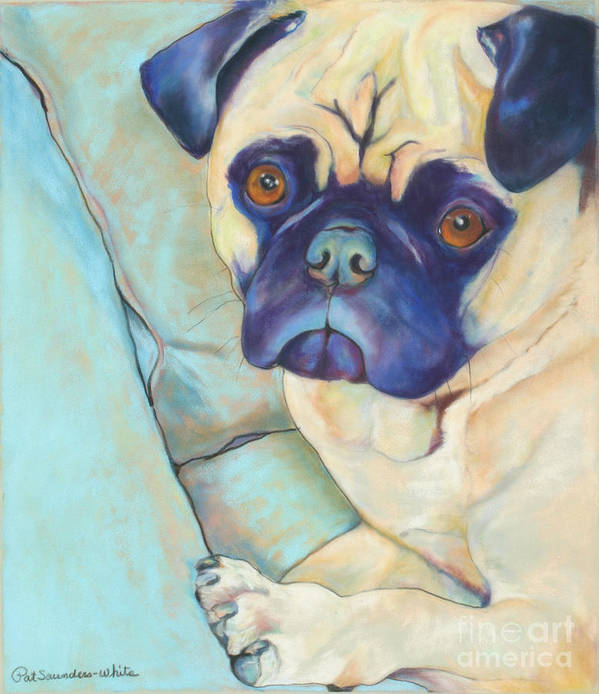 Pug Art Print featuring the pastel Valentino by Pat Saunders-White