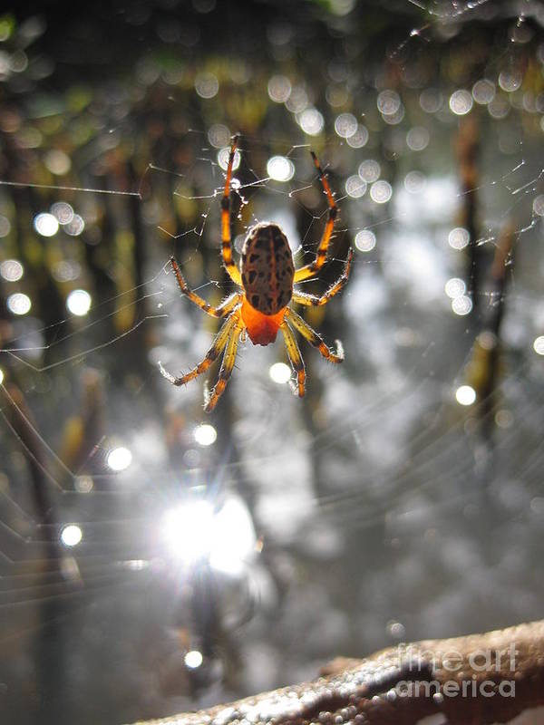 Spiders Art Print featuring the photograph Aglow by AC Hamilton